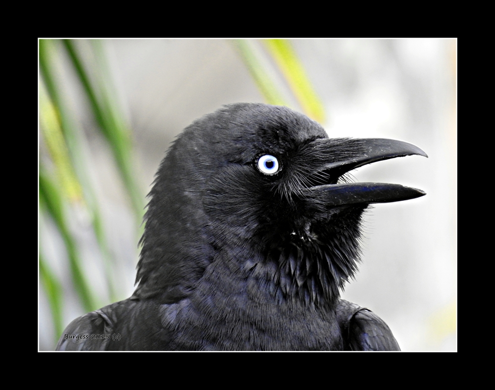 The Spirit Of The Crow